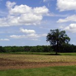 Calling all Washtenaw County Farmland Owners