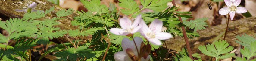 Creekshead Preserve Wildflowers