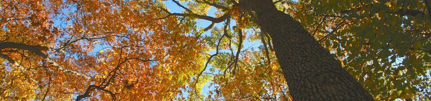 Sharon Hills Nature Preserve