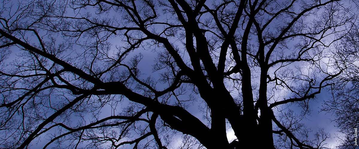 tree at night_John Lloyd_web slider