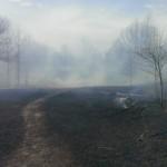Prescribed Burn at Sharon Hills Nature Preserve