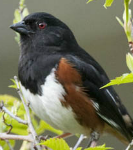 """Create a Brush Pile and Watch Your Local Birds Thrive!"" From eNature.com"