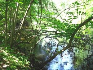 Manchester Michigan, Marsh Creek, River Raisin