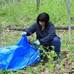 Make Paper from Invasive Plants!
