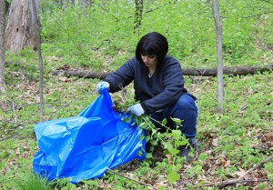 Michigan Invasive Species, Garlic Mustard, Invasive Species