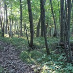 Legacy Land Conservancy Protects New Chelsea-area Property