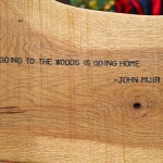 """Going to the Woods is Going Home"" by Susan Lackey"