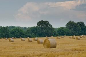 Hay field-John Lloyd