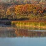 fall reflection John Lloyd