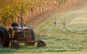 Farm ad 2013-