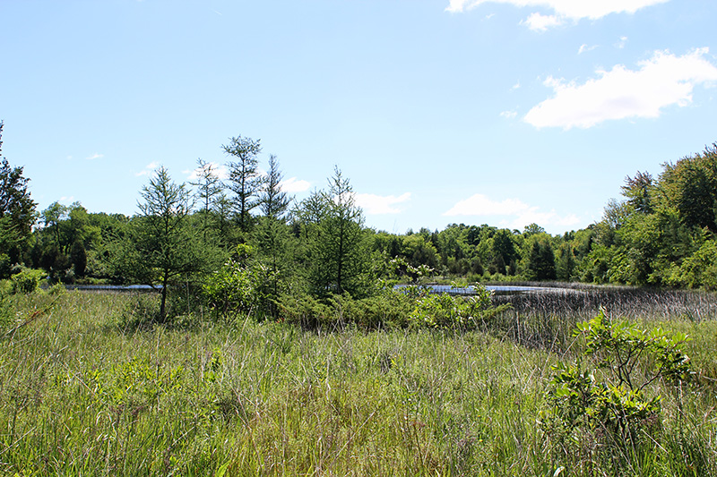 A pond is among Walden West's many habitat types.