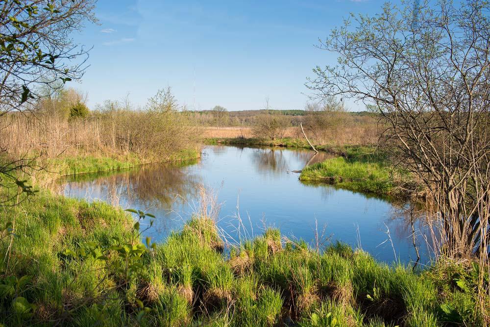 Reichert Nature Preserve. Photo by Paul Morrison.