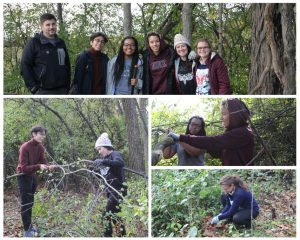 Collage of EMU students removing buckthorn