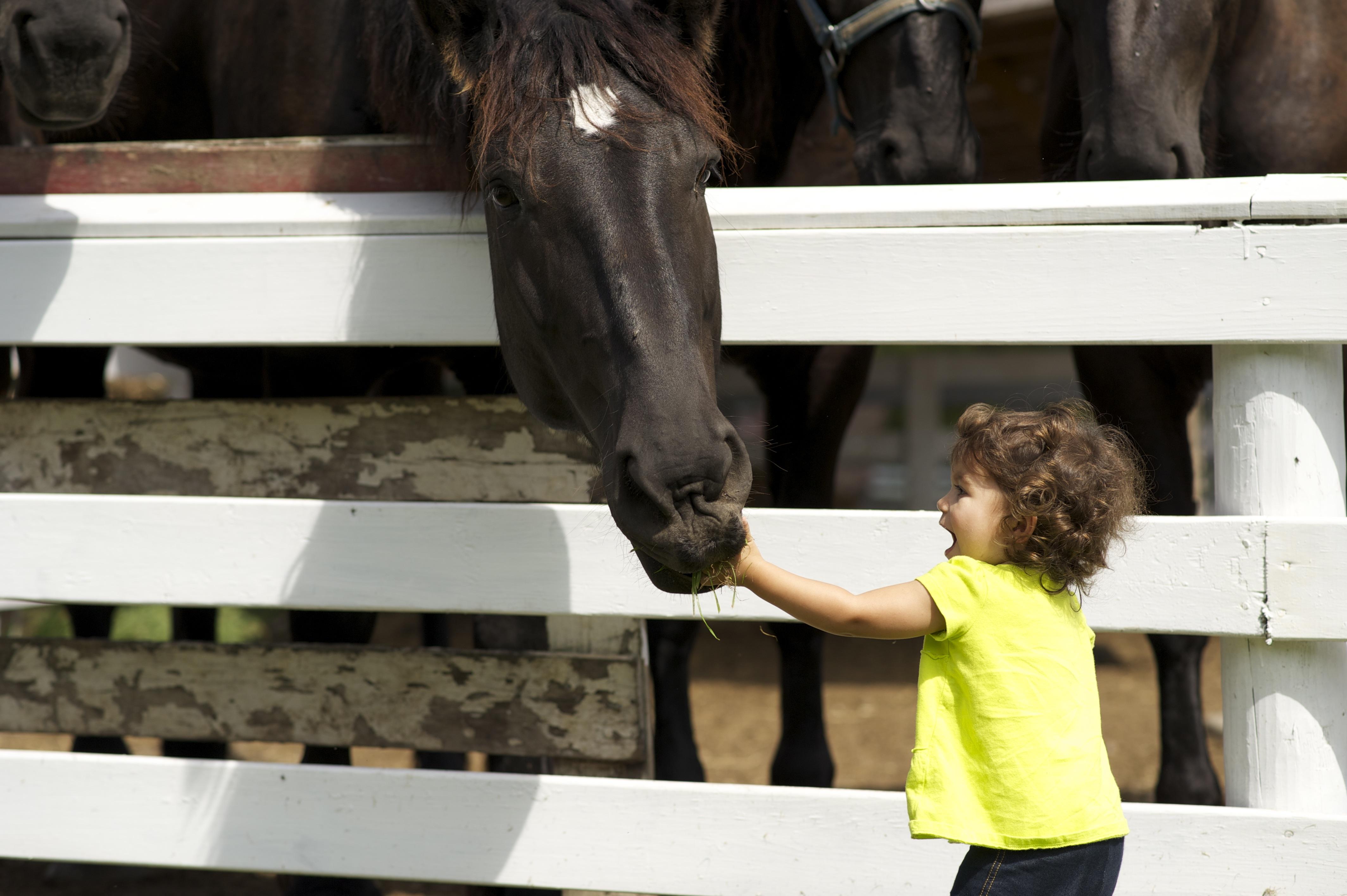 Leila feeding a horse, Callum Gray