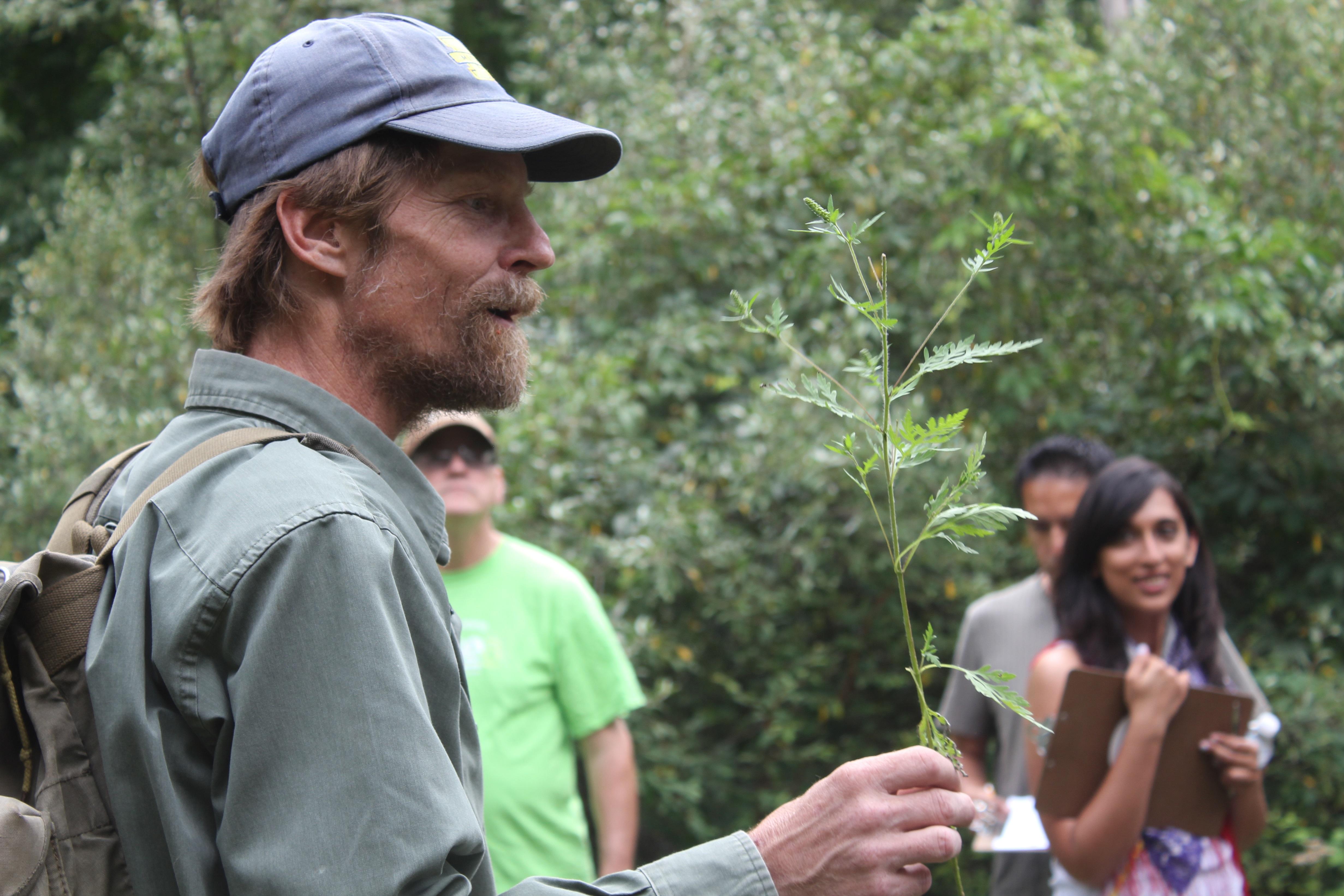 Scratch-N-Sniff plant ragweed