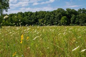 Prairie Field Johnson Preserve